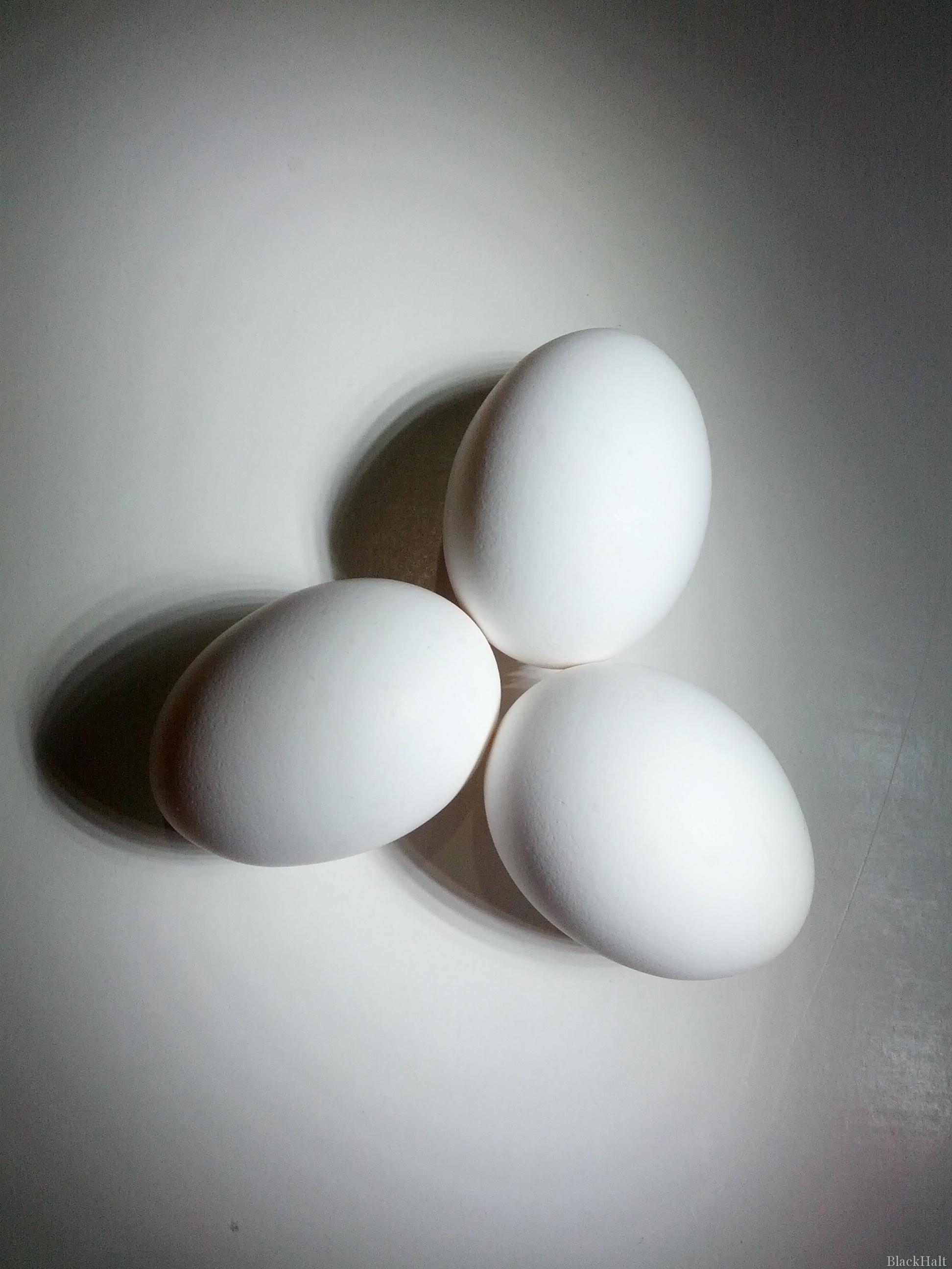 Lieldienu olas Nr.146