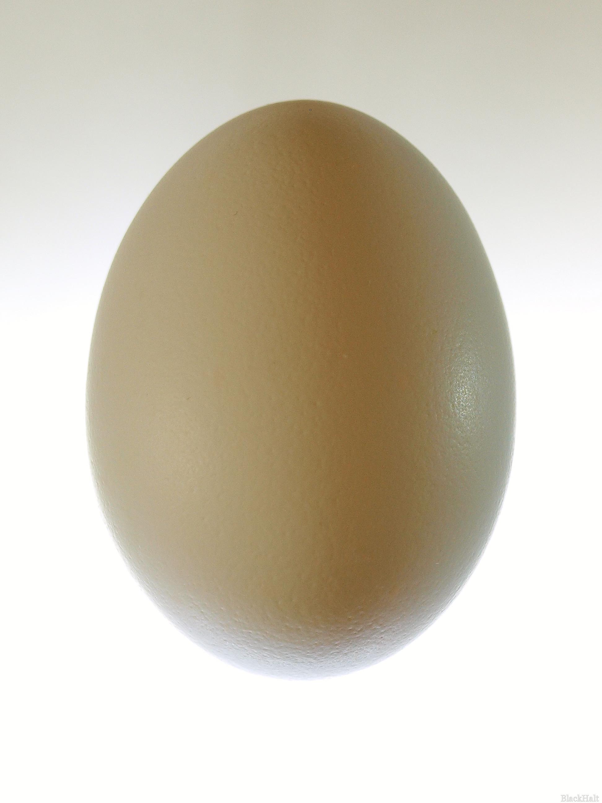 Lieldienu olas Nr.154