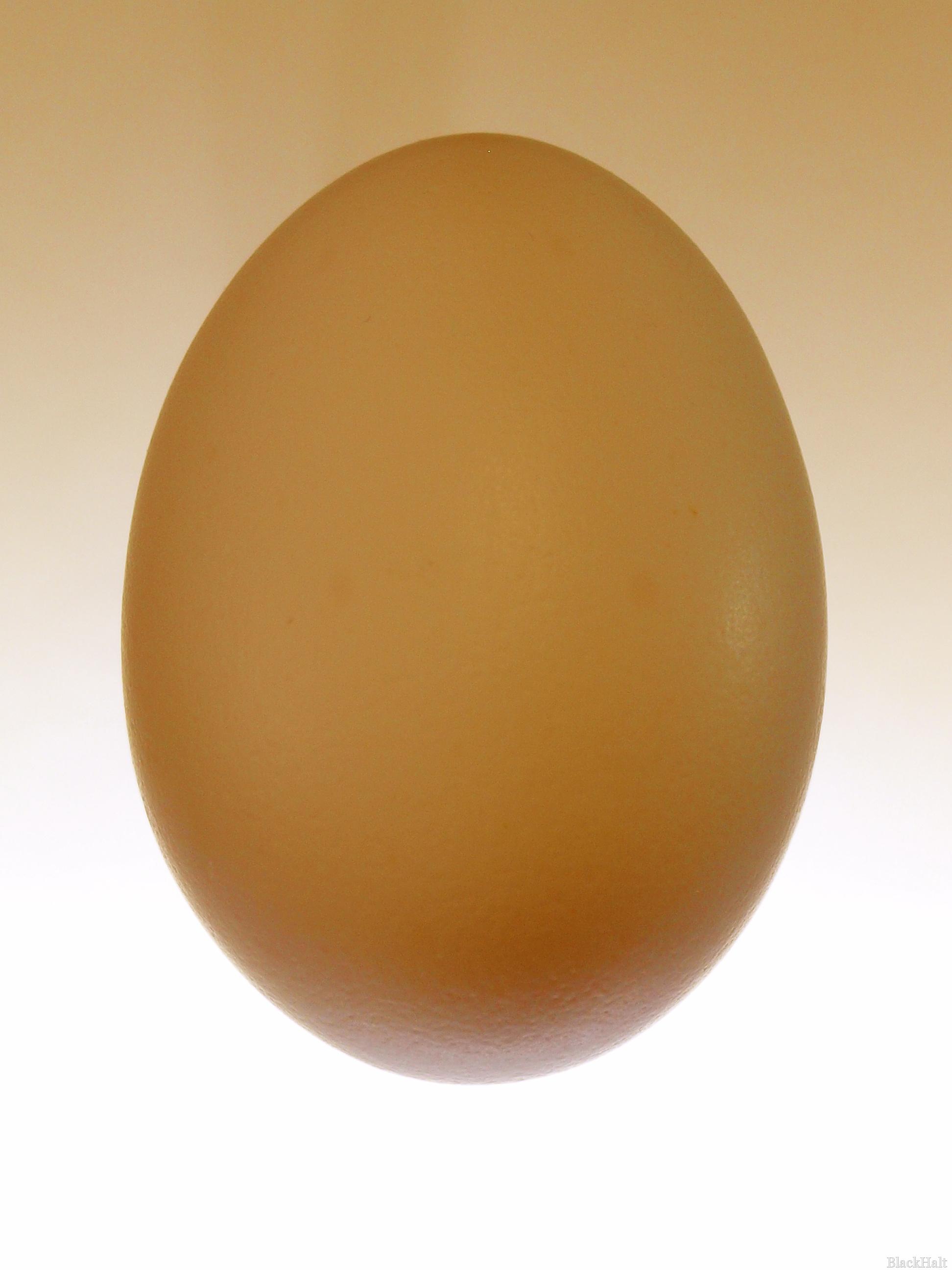 Lieldienu olas Nr.155