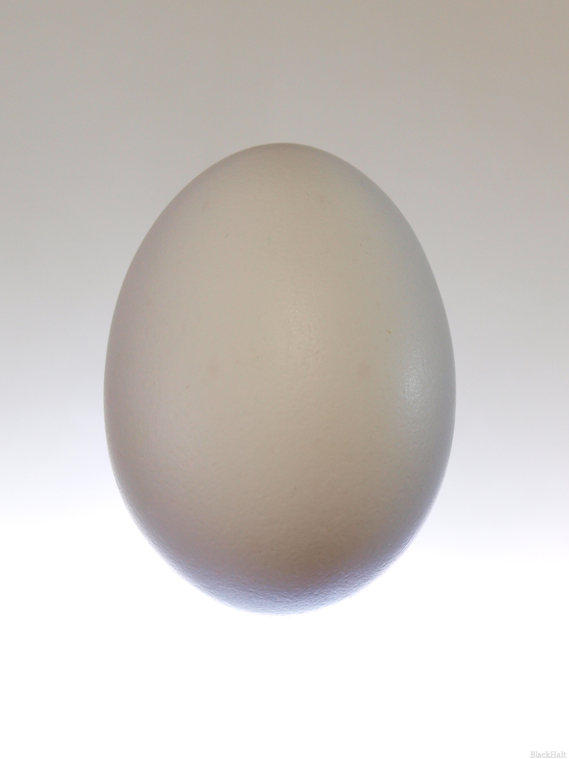 Lieldienu olas Nr.156