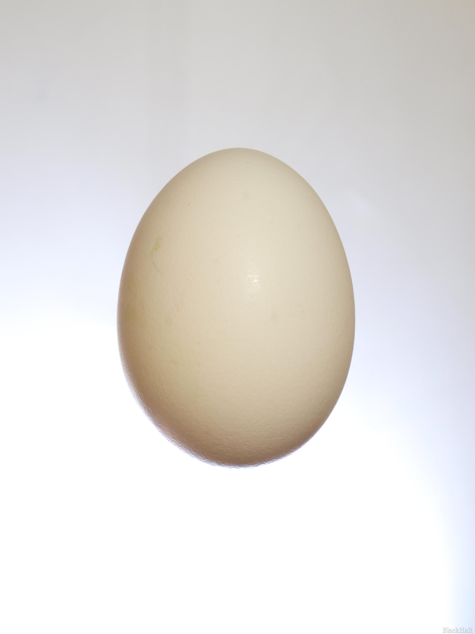 Lieldienu olas Nr.158