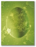 Lieldienu olas Nr.107