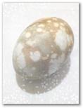 Lieldienu olas Nr.161